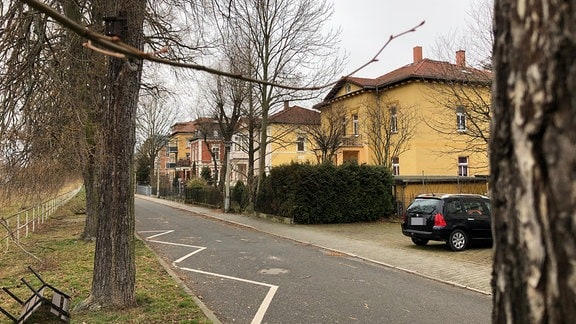 Eine Baumreihe an einer Straße mit Wohnhäusern.