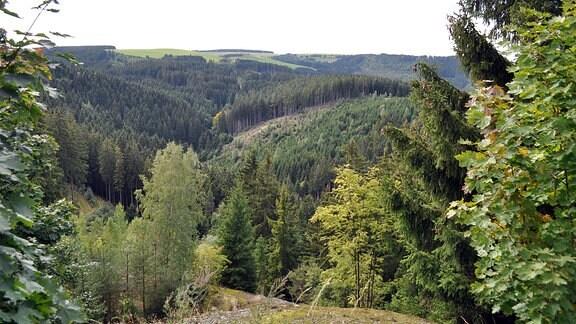 Waldgebiet bei Gräfenthal-Lichtenhain