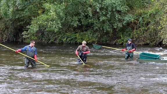Mehrere Angler mit Netzen und Angeln stehen im Wasser.