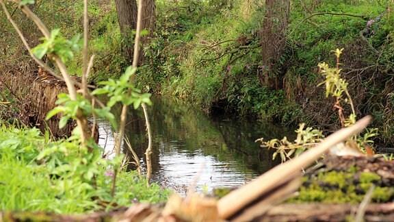 Ruhiger Fluss mit grünen Ufern.