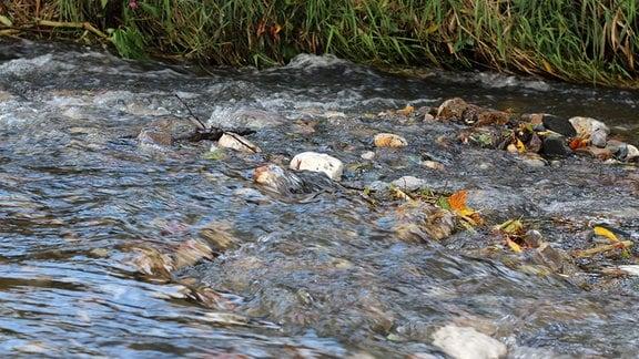 Untiefen und Wirbel in einem Fluss.