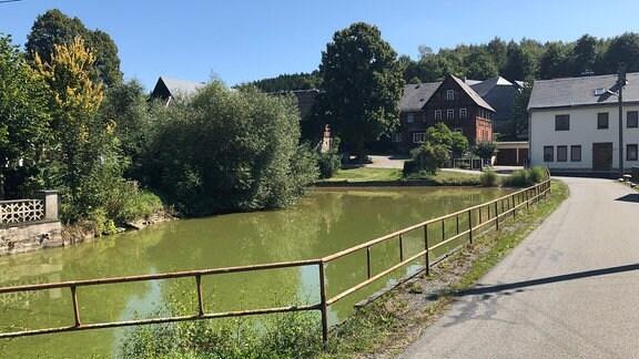 Ein Dorfteich mit grünem Wasser