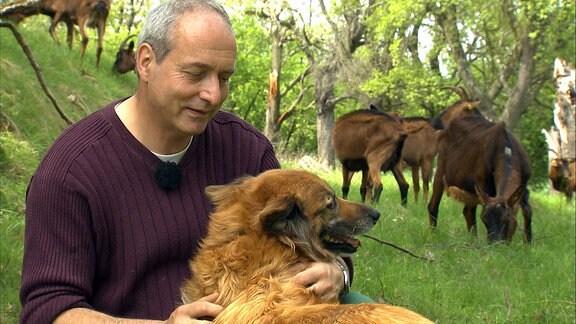 Ein Mann streichelt einen Harzer Fuchs, im Hintergrund stehen Harzer Ziegen