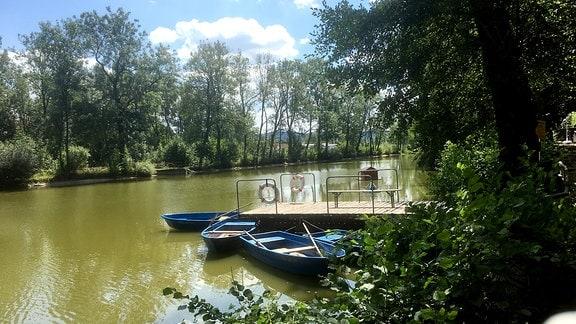 Im rechten Bereich Gebüsch. Auf dem Rest des Bildes ein Teich. In diesen führt von der rechten Seite her ein Holzsteg mit zwei montierten Rettungsringen. An diesem Steg befestigt liegen drei Ruderboote im Wasser. Im Hintergrund zahlreiche großgewachsene Bäume und der blaue Himmel