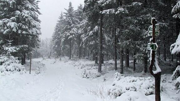 Ein schneebedeckter Wanderweg.