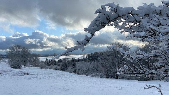 Schneebedeckte Zweige auf einer weißen Wiese.
