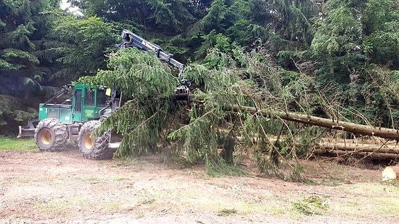 Ein Harvester zieht abgeholzte Bäume aus dem Wald