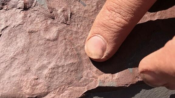 Archäologen  präsentieren Fundstücke der Ausgrabung.