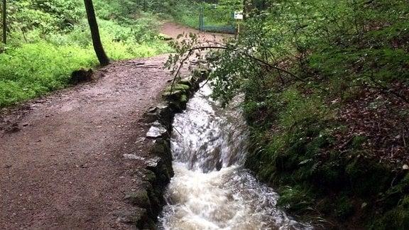 Ein Bach fließt durch eine Schlucht im Wald, daneben verläuft ein Waldweg.