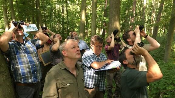 Mehrere Männer stehen mit Ferngläsern und Heftern im Wald und blicken nach oben zu den Baumkronen hinauf
