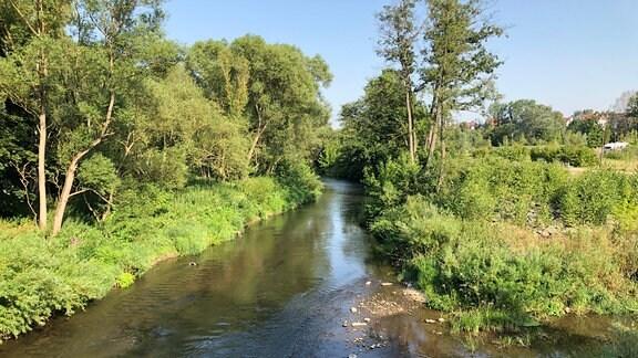 Ein Flußlauf zwischen Bäumen und Sträuchern