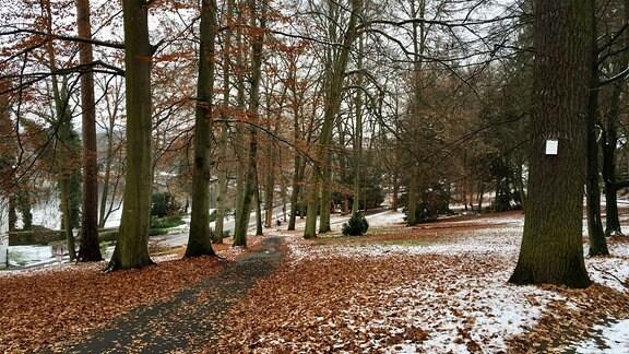 Kurpark von Bad Salzungen im Frühwinter.