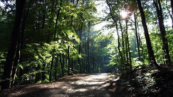 Weg durch einen Wald. Sie Sonne scheint durch die Bäume