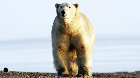 Unter Eisbären - Abenteuer in Russlands Arktis
