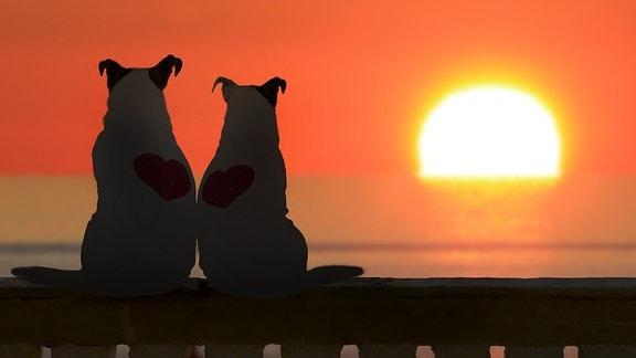 Zwei Hund (Jack Russell) beobachten den Sonnenuntergang.