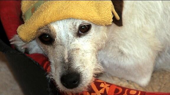 Ein Hund in einem Korb.