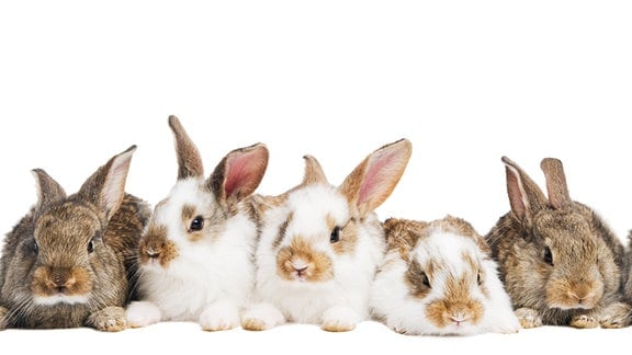 Kaninchen sitzen in einer Reihe