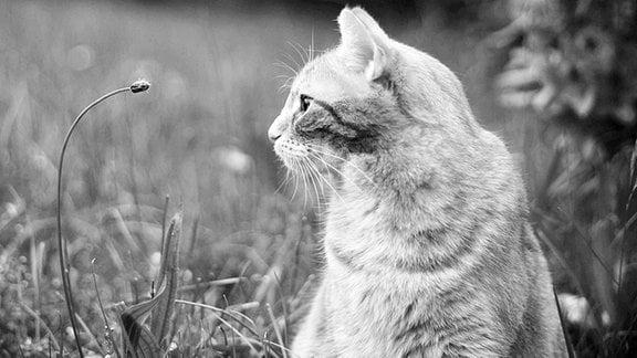 Katze Lea sitzt im Gras.