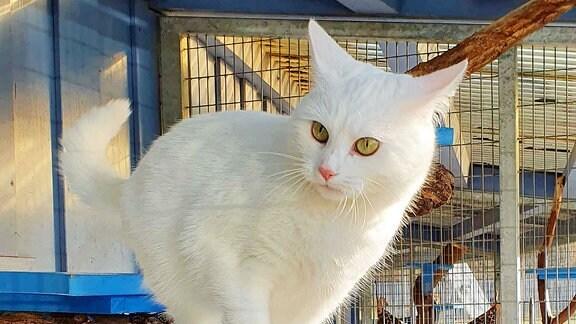 Die weiße Katze Mietzi sitzt im Gehege.