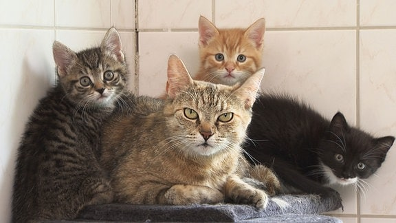 Vier Katzen (Thea und Kitten)