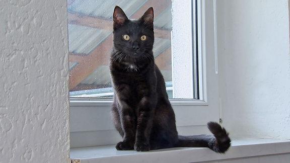 Otto, die schwarze Katze, sitzt auf einem Fensterbrett.