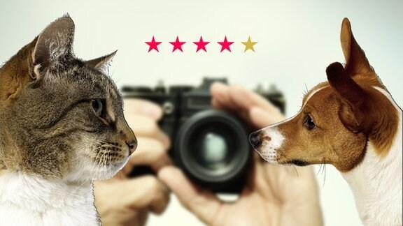Teilen Sie Ihre Fotos mit anderen!