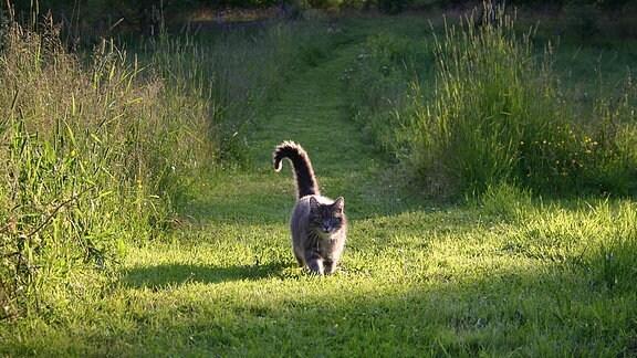 Katze auf einem Feldweg