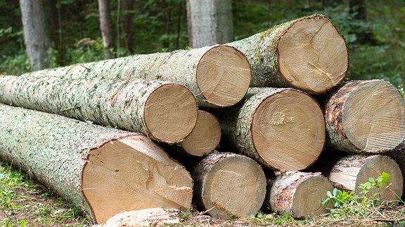 Baumstämme liegen gestapelt in einem Wald