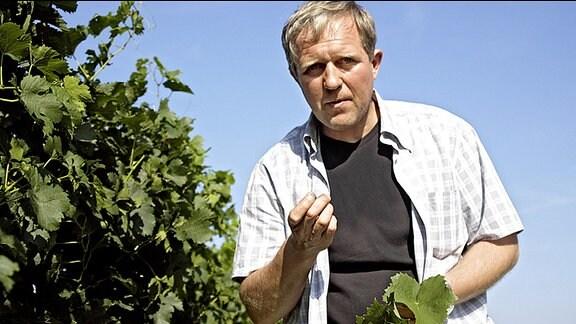 Thomas Stickler (Harald Krassnitzer) prüft die Reben in seinem Weingarten.