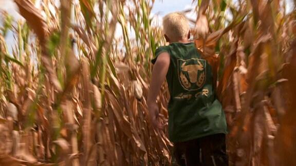 Ein Junge in einem grünen T-Shirt läuft durch ein Maisfeld