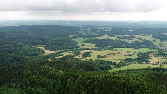 Waldlandschaft in Thüringen.
