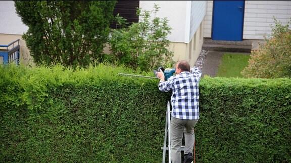 Ein Mann steht auf einer Leiter und verschneidet eine Hecke.