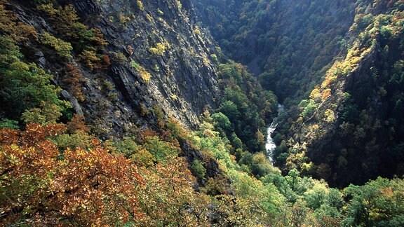 Die Bode hat sich tief in die Harzer Berge eingegraben und ein steiles Tal geschaffen