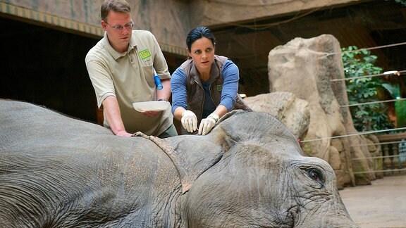 Dr. Susanne Mertens (Elisabeth Lanz) nimmt der Elefantenkuh Mia Blut ab, um einen Grund für ihr auffälliges Verhalten zu finden. Tierpfleger (Komparse , l.).