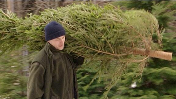 Ein Mann trägt eine gefällte Tanne auf der Schulter durch den Wald.