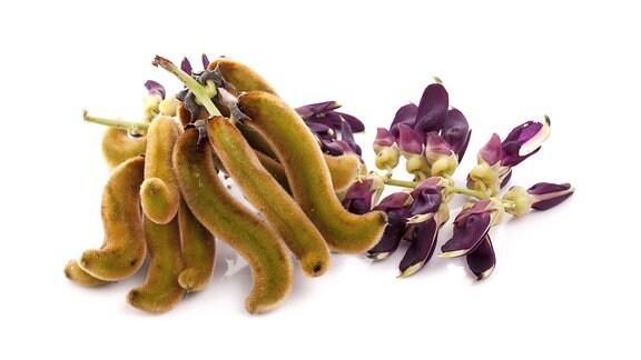 Juckbohnen (Mucuna pruriens)