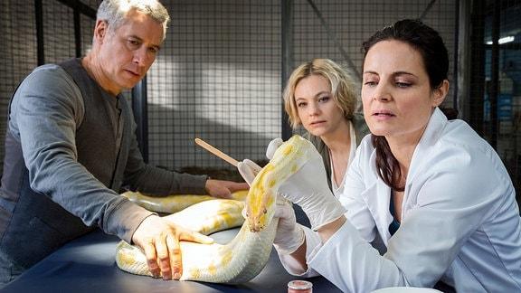Tierärztin Dr. Mertens (Elisabeth Lanz, r.) untersucht den Python, der anscheinend im Zoo ausgesetzt wurde. Zoodirektor Dr. Blum (Ralph Herforth, l.) und Assistentin Annett (Anna Bertheau, M.) schauen fasziniert zu.
