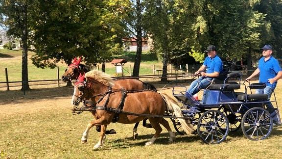 Der Reit- und Fahrverein Flarchheim hat etwas über 40 Mitglieder. Karsten Stötzel (hinten auf der Kutsche) ist der Stellvertretende Vorsitzende. Eine seiner Spezialitäten ist das Ktschfahren. Das trainieren auch die Kinder im Verein.
