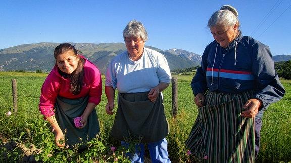 Katia, Lilyana Pumpalova und Christina Staliova - die drei Frauen aus drei Generationen haben ihr eigenes Rosenfeld angepflanzt und ernten dieses Jahr zum ersten Mal.