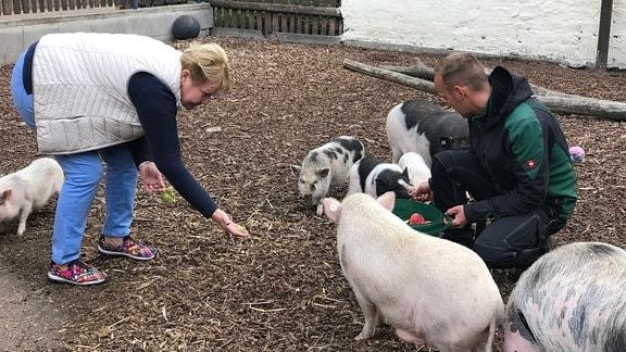 Ein Mann füttert Schweine aus einem Eimer, der am Boden steht. Eine Frau hält einem Schwein eine Traube entgegen.