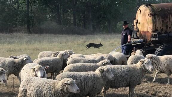 Ein Schäfer lässt Wasser aus einem Schlauch fließen, der an einem Lkw-Tank befestigt ist. Er trägt einen Hut. Im Hintergrund ist ein Hund zu sehen, im Vordergrund stehen Schafe.
