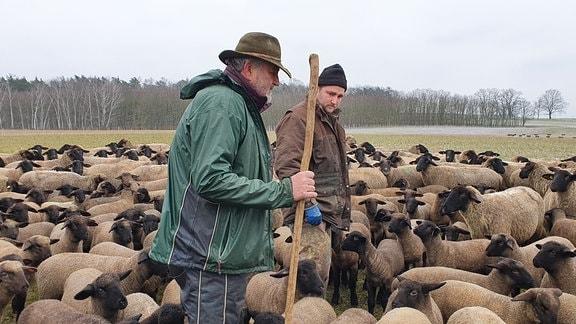 Konrad Weber und sein Sohn Martin halten 800 Schafe. Bei Wind und Wetter stehen die Tiere draußen – glücklich versichern die Schäfer.