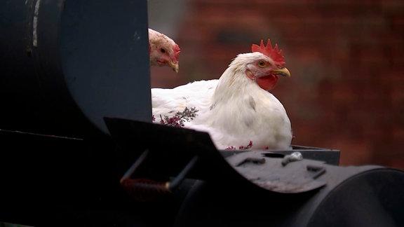Grillhähnchen mal anders. Ihre Hühner bescheren Familie Graf jeden Tag etwa 20 Eier – kommen aber auch ab und zu in die Pfanne