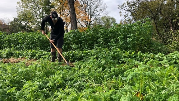 Robins Reich ist der Gemüsegarten. Am Wochenende verbringt er hier schon mal bis zu fünf Stunden täglich.