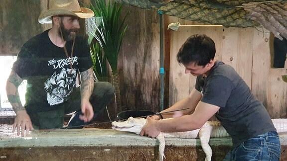 Der kleine Albino-Alligator kann kräftig zuschnappen. Fernando Richter und sein Sohn Francesco verpassen ihm eine Schönheitskur. In wenigen Tagen darf ihr Döbrichauer Reptilienzoo wieder öffnen.