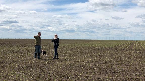 Henner und Harriet Einführ schauen auf ihrem Maisfeld nach den Pflanzen.