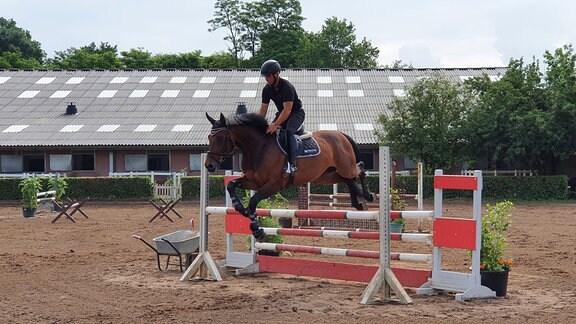 Eine Person reitet auf einem Pferd, das über ein Hindernis springt. Im Hintergrund eine Reithalle.