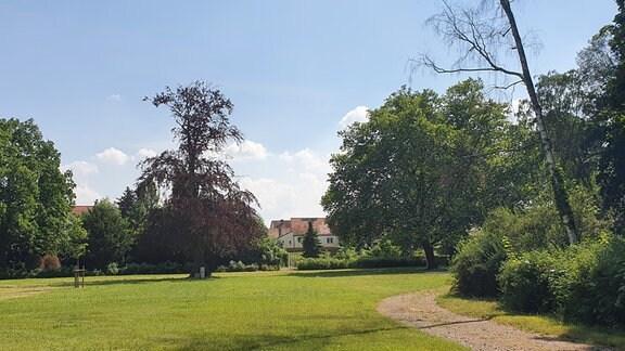 Eine weitläufige Parkwiese mit einigen Bäumen.