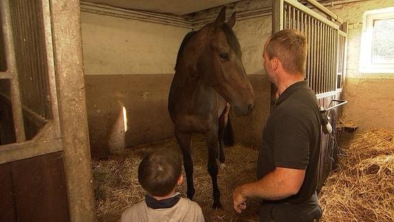 Ein Mann und ein Kind betreten einen Reitstall, in dem ein Pferd steht.