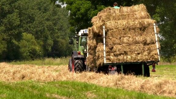 Traktor auf Feld mit Anhänger voll mit Strohballen